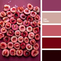 beige-peach color, bright wine color, burgundy color, cherry color, cherry flesh color, lilac-red, rich wine tones, shades of burgundy, summer color scheme, summer tones. Red Color Schemes, Red Colour Palette, Color Combos, Color Trends, Color Harmony, Color Balance, Color Palette Challenge, Wine Bottle Design, Design Seeds