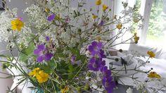 Luonnon kukkia.