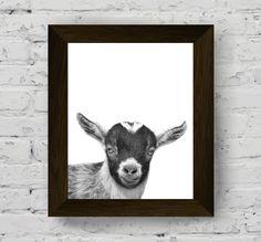 goat print, goat wall art, black and white goat, black white animal, goat photo, farm animal print, goat poster, animal art, animal poster di AlemiPrints su Etsy