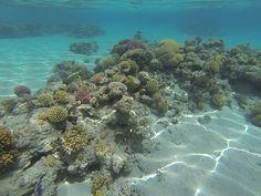 Κοραλλιογενούς Υφάλου