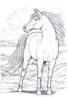 disegni/cavalli/cavallo_11.jpg
