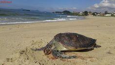 Boto cinza e tartaruga são encontrados mortos em praia do Sergipe