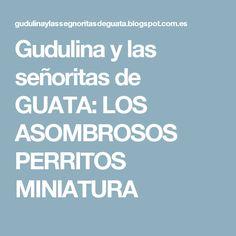 Gudulina y las señoritas de GUATA: LOS ASOMBROSOS PERRITOS MINIATURA