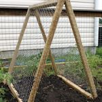 Portable A-frame trellis - an easy DIY lightweight design that you can take with you. Link to downloadable instructions