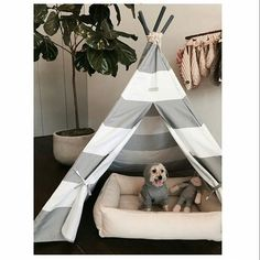 // @themaxbone // TeePee's for Dogs ... who doesn't love sleeping in a gorgeous TeePee!? #regram #maxbone #dog #teepee #dogbed #decor #igdog #igpet #furbaby #traderpet