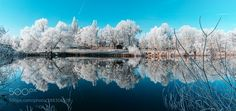 White Forest by DirkDelhaes