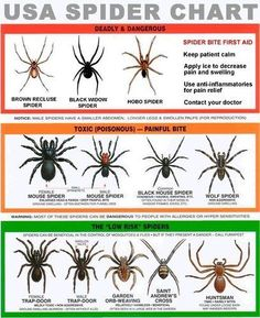 Have a spider? Use the chart!
