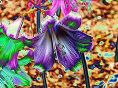 Playing with March Lilies and Coral Draw Effects Lilies, March, Coral, Pets, Animals, Irises, Animales, Animaux, Orchids