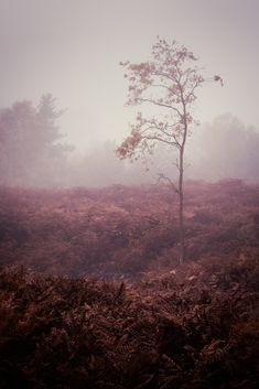 Holt Country Park 02/11/2015 - Matthew Dartford