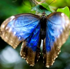 andyouwhisperyouloveme:    Flutter in Blue by www.LKGPhoto.com on Flickr