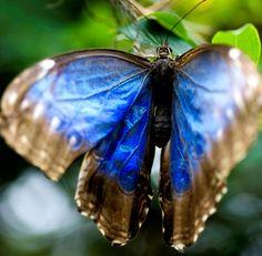 andyouwhisperyouloveme:    Flutter in Blue by www.LKGPhoto.comon Flickr