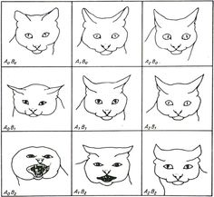 Science confirms: cats have facial expressions - Unravel Malta Facial Action Coding System, Facial Anatomy, Charles Darwin, Cat Facts, Facial Expressions, Kittens, Comics, Cat Stuff, Studying