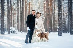 snowy forest, winter wedding, dog husky