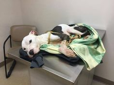 **DONATIONS DESPERATELY NEEDED TO SAVE THIS GIRL'S LIFE.** Starved dog, found abandoned on road, fights to survive