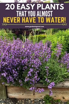 20 Easy Plants That you Almost Never Have to Water!