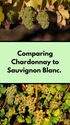 Chardonnay and Sauvignon Blanc