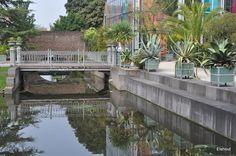 Foto: Hortus Botanicus Leiden