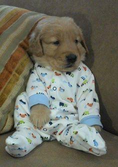 Dog in pjs