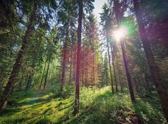 #royaltyfree #stockphoto: Green natural Finnish forest illuminated by sunbeams through the trees - Shutterstock: http://ift.tt/2uFAF2X #landscapes #finnishnature #naturelovers #ourfinland #natureaddicts #allwhatsbeautiful #thebestoffinland #ourplanetdaily #lovelyfinland #nordicconnection #photooftheday #neverstopexploring #lifewelltravelled