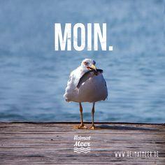 MOIN. #heimatmeer