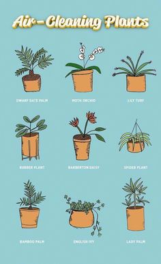 The beds are made and the dishes are done but theres always more to clean - Air Bed - Ideas of Air Bed AirBed - The beds are made and the dishes are done but theres always more to clean like the air for instance. We rounded up nine plants that give your h Indoor Garden, Indoor Plants, Dorm Plants, Hanging Plants, Indoor Trees, Office Plants, Herb Garden, Garden Beds, Vegetable Garden