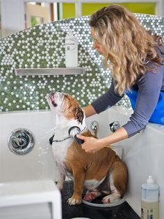 Top dog grooming tips! this is so helpful! Pet Shop, Dog Grooming Shop, Dog Grooming Salons, Dog Grooming Business, Doggie Day Spa, Dog Spa, Bulldogs, Pet Hotel, Dog Salon