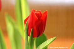 פרחים שכדאי להביא הביתה בחג האהבה, כדי להביע הוקרה ותודה לנו לסובבים אותנו וליקום.