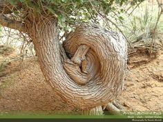 KNOT TREE