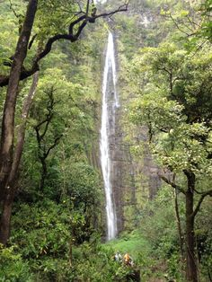 Two day-hikes, Maui Bamboo Forest and Kauai Napali Coast Trail, listed as favorites in the whole world by the author