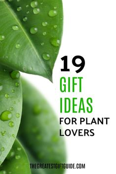 Our gift guide for plant lovers has unique gift ideas anyone who has an affection for plants will love. These make awesome Christmas or birthday gifts. #giftguide #gifts #plants #plant #gift #giftideasforher #giftideasforhim #uniquegiftideas