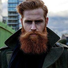 ginger beard .