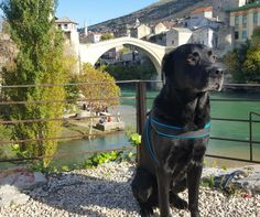 Where to go with animals in Mostar? Here are pet friendly cafe and restaurants. Read more on our website: www.tourguidemostar.com #mostar #visitmostar #tourguidemostar #pets #animals #petfriendly #travel #traveltips