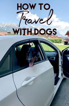 The Ultimate Guide to Traveling with Dogs - Helene in Between