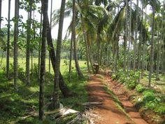 Sleepy village in Kerala