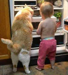 """""""You Take Ice Cream, l'll Take Fish."""" More cute images of cats and kittens, visit http://pewpaw.com/, #funny #cute #cat #kitty #kitten #pet #cat, #kitty, #animals, #funny. #cat, #animals, #funny. #cat #kitty #kitten #awesome #cute #lol #funny #cat #offline #windows #followspreeperrie"""