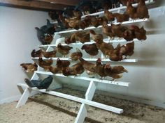 Raising chickens has gained a lot of popularity over the past few years. If you take proper care of your chickens, you will have fresh eggs regularly. You need a chicken coop to raise chickens properly. Use these chicken coop essentials so that you can. Chicken Roost, Chicken Cages, Chicken Pen, Chicken Coup, Chicken Garden, Chicken Feeders, Chicken Life, Backyard Chicken Coops, Chicken Coop Plans