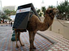 solar powered camel photo