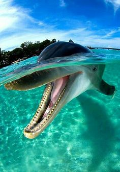 Smile you're on Island time! Caribbean villas > www.thevillahunter.com