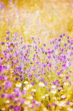 Flores, Flickr