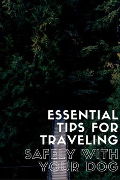 Essential Tips For Traveling Safely with Your Dog