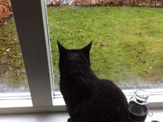 Hier zie je mijn kat op de vensterbank zitten. Ook zie je een stukje van mijn tuin. Omdat het regent is het gras nat. Het gras heeft water nodig om van te leven. Dit is de flux in de foto. De kat is hier samen met het gras de biosfeer. De regen op het gras is de hydrosfeer. Je ziet ook nog een heel klein stukje van de stenen straat. Dit is de lithosfeer. Deze foto is voor mij belangrijk omdat ik hier elke dag naar kijk, want ik woon hier.