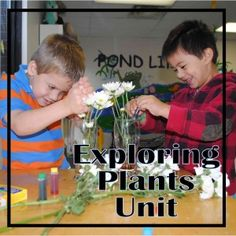 Complete hands on plant unit for grades 2 and 3 - meets common core and national science standards.  FREE!!!
