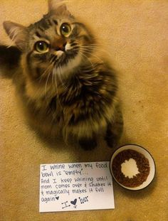 """My black cat always wanted the food bowl """"topped"""" off, and if I did oblige, he'd promptly bumped my hand while pouring food as so more food than planned fell out...Brat cat!  Miss that guy :)"""