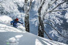 Julie Nieuwenhuijs - Ski good or eat wood in the famous Japanese birch forests  - Nozawa Onsen, Japan, January 2013 - Photography by Caroline van't Hoff - More on  https://www.facebook.com/juulski.ca | https://www.instagram.com/dutchiesdoski/ | http://carolinevanthoffphotography.viewbook.com/