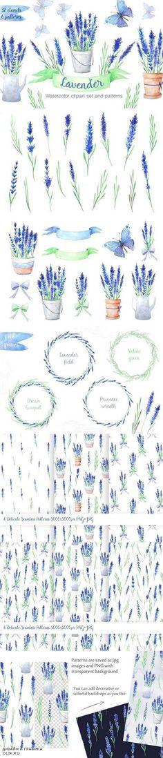 Watercolor Blue Lavender Flowers 1280572