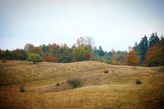 Jordløse Bakker i efterårsfarver #visitfyn #fyn #visitdenmark #naturelovers #natur #denmark #danmark #dänemark #landscape #nofilter #sky #assens #mitassens #forrest #fynerfin #skov #vielskernaturen #visitassens #lyng #picoftheday #autumn #efterår