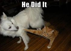 Who did it?   #funny #dogs #cats