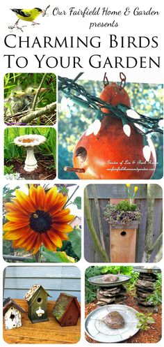 How to attract birds to your garden throughout the seaons, to nest, feed, and play.