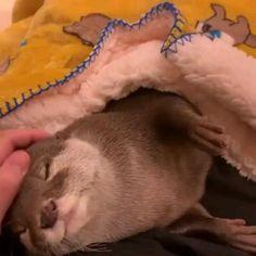 Cute Little Animals, Cute Funny Animals, Cute Cats, Cute Animal Videos, Cute Animal Pictures, Cute Creatures, Animal Memes, Animals Beautiful, Animals And Pets