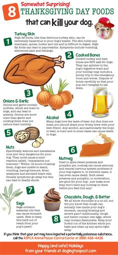 8 Thanksgiving Day Foods That Can Kill Your Dog #Infographics — Lightscap3s.com